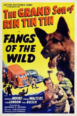 https://imgc.allpostersimages.com/img/posters/fangs-of-the-wild-rin-tin-tin-jr-dennis-moore-1939_u-L-PT97WW0.jpg?artPerspective=n