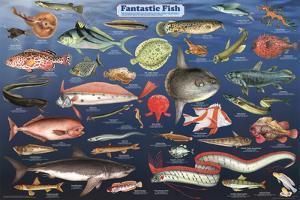 Fantastic Fish Educational Science Chart Poster