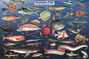 Fantastic Fish Educational Science Chart Poster
