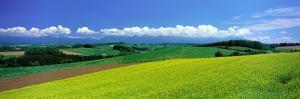 Farm Fields Biei Hokkaido Japan