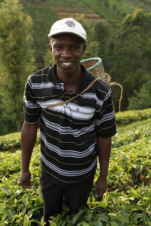 https://imgc.allpostersimages.com/img/posters/farmer-lincoln-kimanthi-mugo-picking-tea-kathangiri-kenya_u-L-Q1GYJYK0.jpg?artPerspective=n