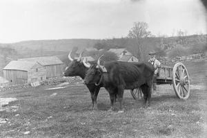 Farmer on Ox Cart