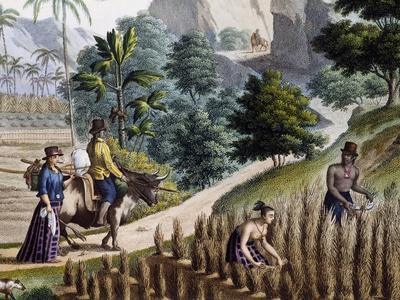 https://imgc.allpostersimages.com/img/posters/farmers-at-work-guam-island-mariana-archipelago-engraving-by-louis-de-freycinet_u-L-PQ3DPS0.jpg?p=0