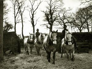 Farmers Riding Their Horses Back to the Stables, 1935