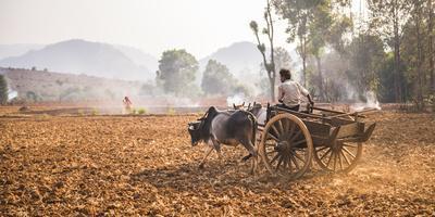 https://imgc.allpostersimages.com/img/posters/farming-between-inle-lake-and-kalaw-shan-state-myanmar-burma-asia_u-L-Q12SENG0.jpg?p=0
