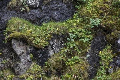 https://imgc.allpostersimages.com/img/posters/faroes-rocks-vegetation_u-L-Q1EY7U80.jpg?artPerspective=n