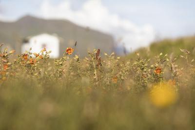 https://imgc.allpostersimages.com/img/posters/faroes-vagar-flower-meadow_u-L-Q1EYBNT0.jpg?artPerspective=n
