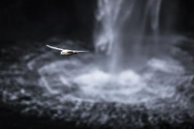 https://imgc.allpostersimages.com/img/posters/faroes-vagar-gasadalur-fulmar-fulmarus-glacialis-waterfall_u-L-Q1EYE810.jpg?artPerspective=n