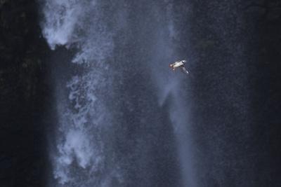 https://imgc.allpostersimages.com/img/posters/faroes-vagar-gasadalur-puffin-fratercula-arctica-waterfall_u-L-Q1EY6LI0.jpg?artPerspective=n