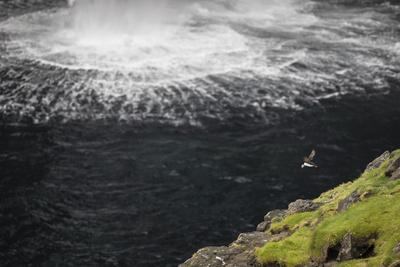 https://imgc.allpostersimages.com/img/posters/faroes-vagar-gasadalur-puffin-fratercula-arctica-waterfall_u-L-Q1EYDDX0.jpg?artPerspective=n