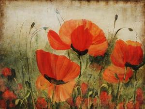 Poppy Daze by Farrell Douglass