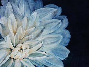 White Dahlia by Farrell Douglass