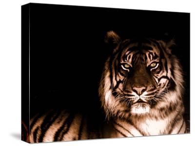 Portrait of Tiger by FarzyB
