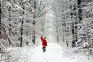 Father Christmas Riding Bicycle Through Beech