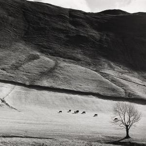 Boardale, Cumbria 1982 by Fay Godwin