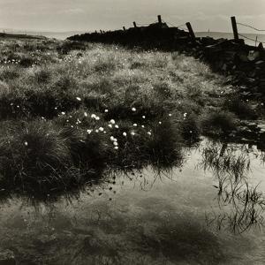 Bog Cotton, Bridestones Moor by Fay Godwin