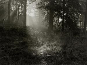 Light Shining Through Trees in Forest by Fay Godwin