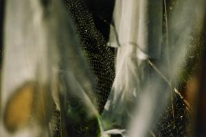 Plants Growing Under Netting by Fay Godwin