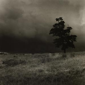 Tree With Sheep, Mist and Low Cloud by Fay Godwin