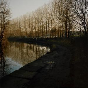 Trees Growing Along Canal in Bradford by Fay Godwin