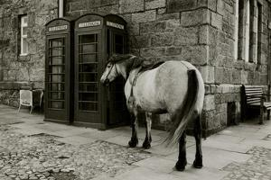 Wild Horse Standing Next To Two Phone Boxes by Fay Godwin