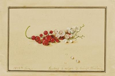 Red and White Currants, 1818
