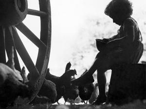 Feeding Chickens by N Smith