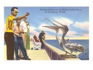 Feeding Pelicans, St. Petersburg, Florida
