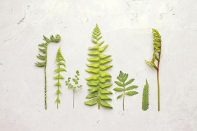 Flat Lay Ferns II by Felicity Bradley