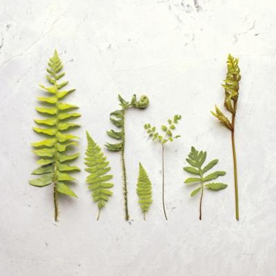 Flat Lay Ferns III by Felicity Bradley