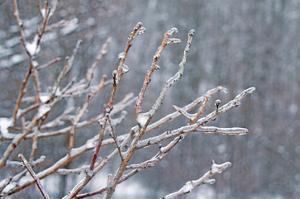 Glistening Branches I by Felicity Bradley