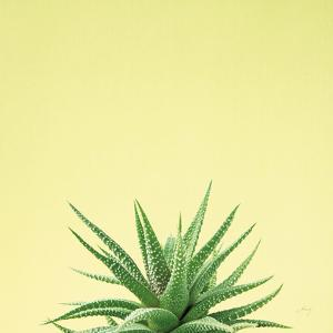 Succulent Simplicity I by Felicity Bradley
