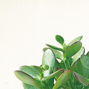 Succulent Simplicity IV Neutral by Felicity Bradley