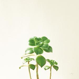 Succulent Simplicity IX Neutral by Felicity Bradley