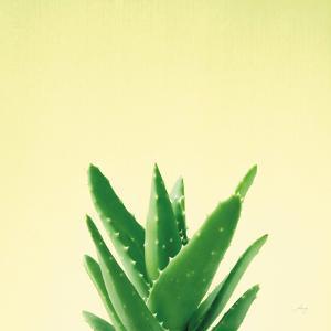Succulent Simplicity V by Felicity Bradley