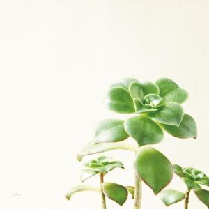 Succulent Simplicity X Neutral by Felicity Bradley
