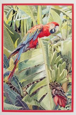 Jungle Parrot by Felicity House