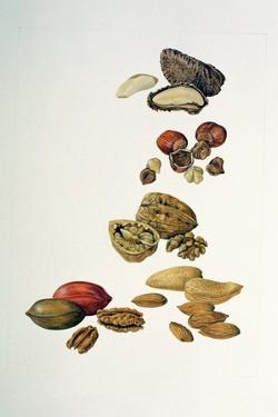 Nuts by Felicity House