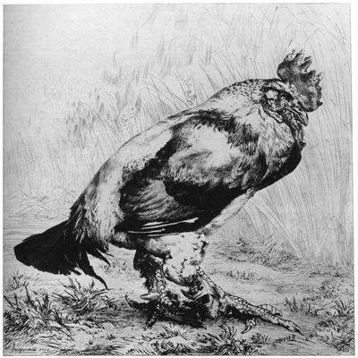 La Coq, C1850-1910