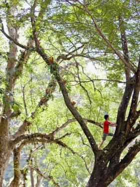 Keeper Climbing Tree at Masae Elephant Camp by Felix Hug