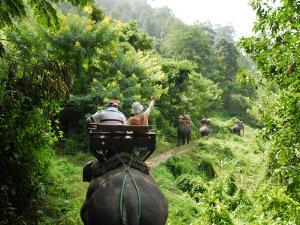 Tourists Riding Elephants Along a Chiang Mai Elephant Camp Trail by Felix Hug