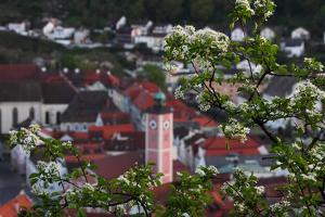 Looking Through the Bushes to Eichstatt by Felix Strohbach