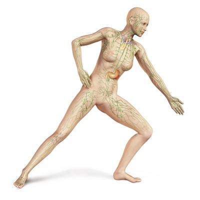 Female Body in Dynamic Posture with Lymphatic System Superimposed