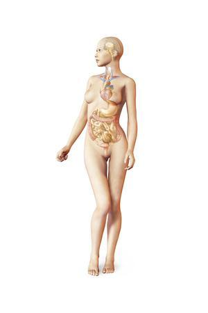 https://imgc.allpostersimages.com/img/posters/female-body-with-full-endocrine-system-superimposed_u-L-PN90E60.jpg?p=0