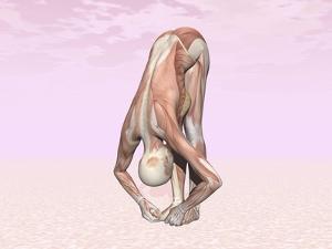 Female Musculature Performing Big Toes Yoga Pose