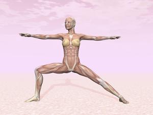 Female Musculature Performing Warrior Yoga Pose