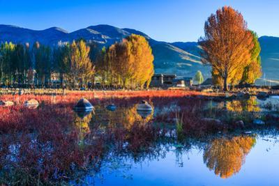 Autumn Scenery, Daocheng, Sichuan China by Feng Wei Photography