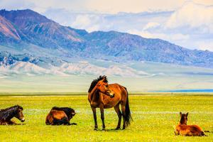 Horses Wondering on Prairie by Sayram Lake by Feng Wei Photography