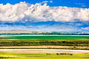 Keerkante Grassland, Zhaosu, Xinjiang China by Feng Wei Photography