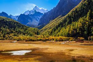 Luorong Cattle Farm, Yading, Sichuan China by Feng Wei Photography